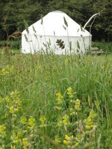 meadows yurt