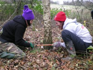 conservation project volunteers